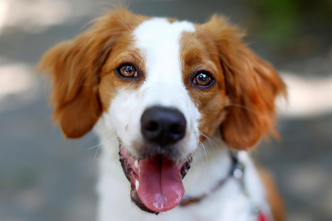 For Oklahoma Pets Independence Day Can Be Dangerous
