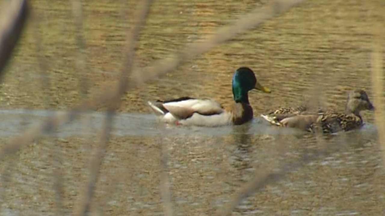 Dozens Of Ducks Found Dead At Bethany Pond
