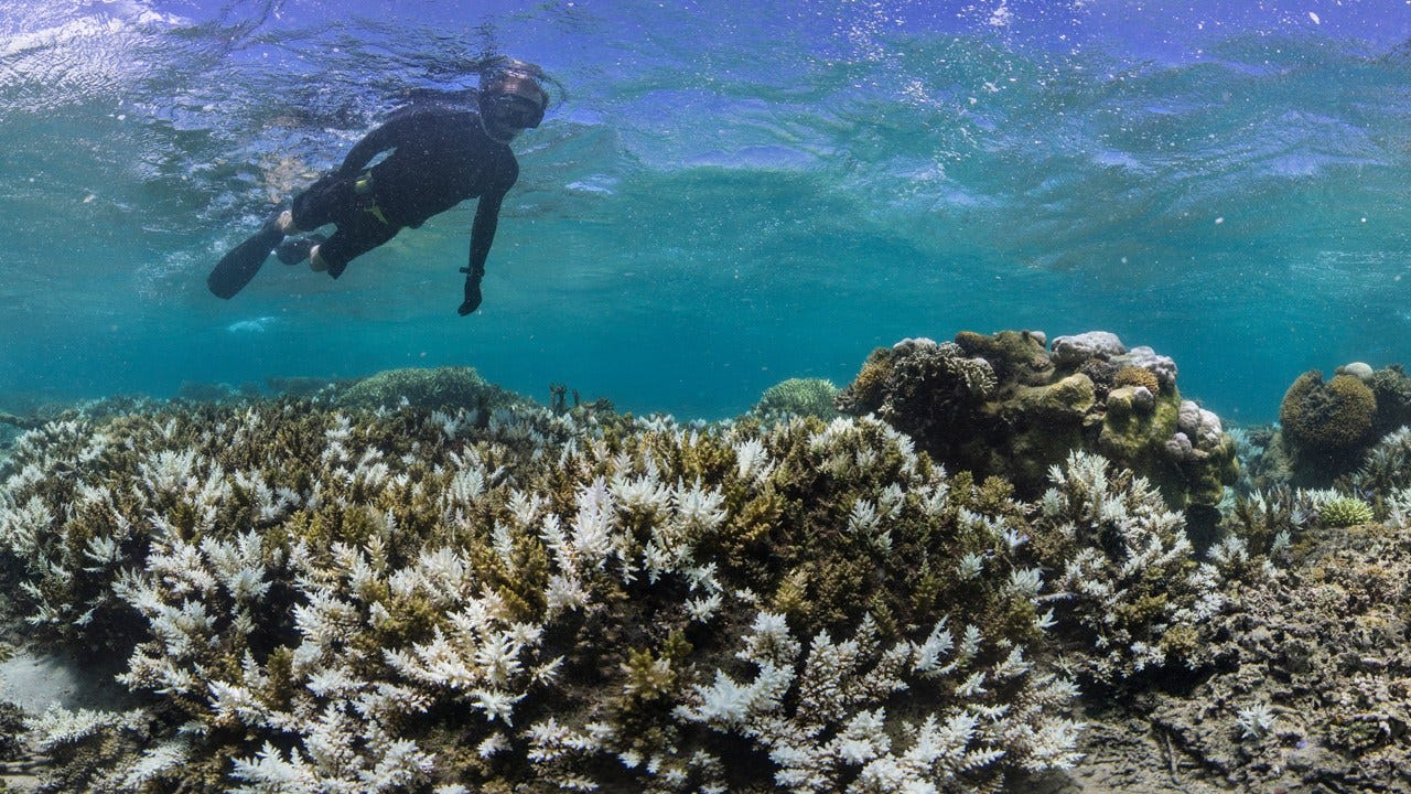 Mass Coral Bleaching Hits The Great Barrier Reef – Again
