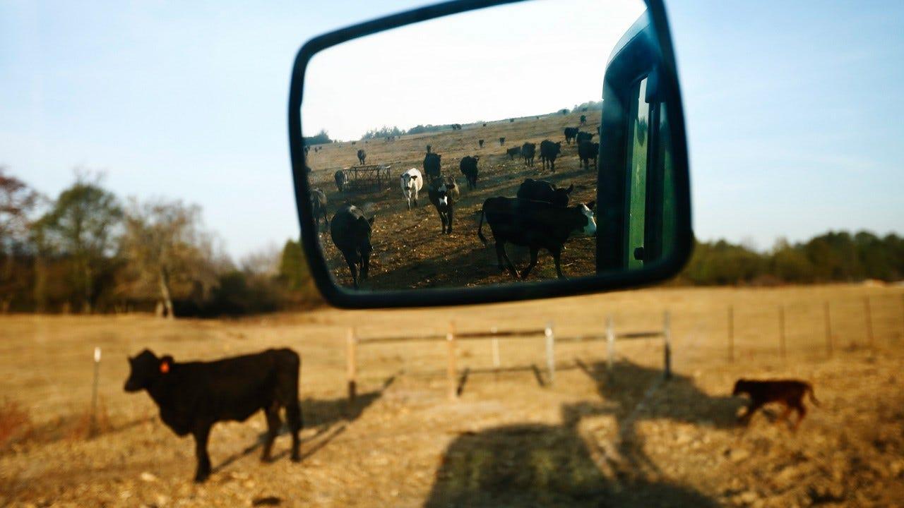 Crops Fall Victim To Winter 2017's Drastic Temperature Swings