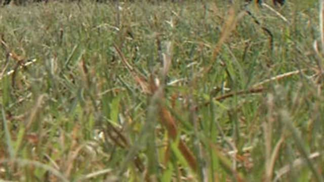 City Encourages OKC Residents To Use Less Fertilizer