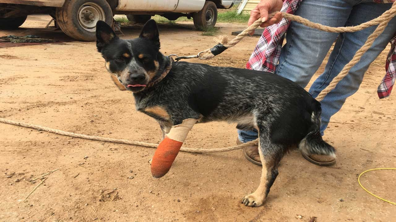 Purcell Officer Charged In Shooting That Severely Injured Dog
