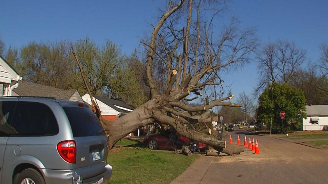 Massive Tree Topples Over In Shawnee Storm