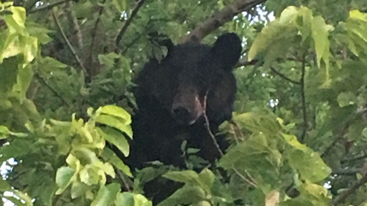 Black Bear Spotted By Couple In Wayne