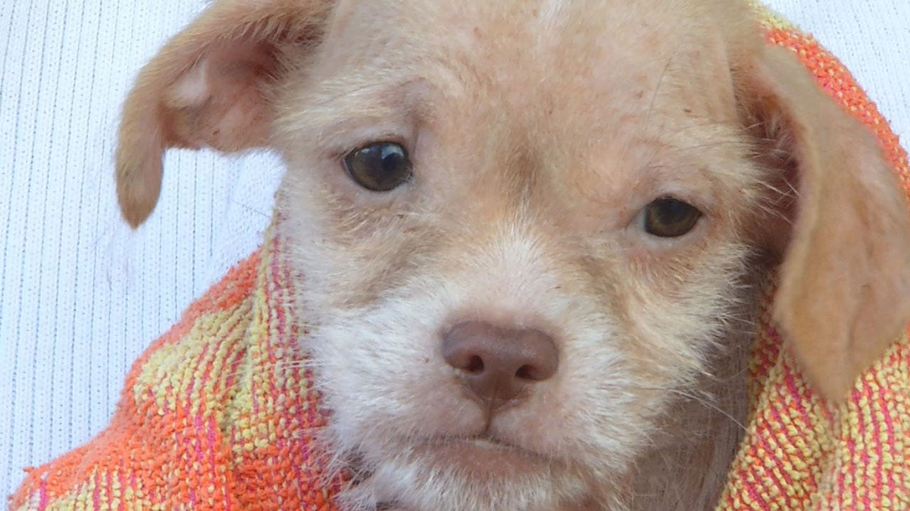 Litters Of Puppies Abandoned In Logan County