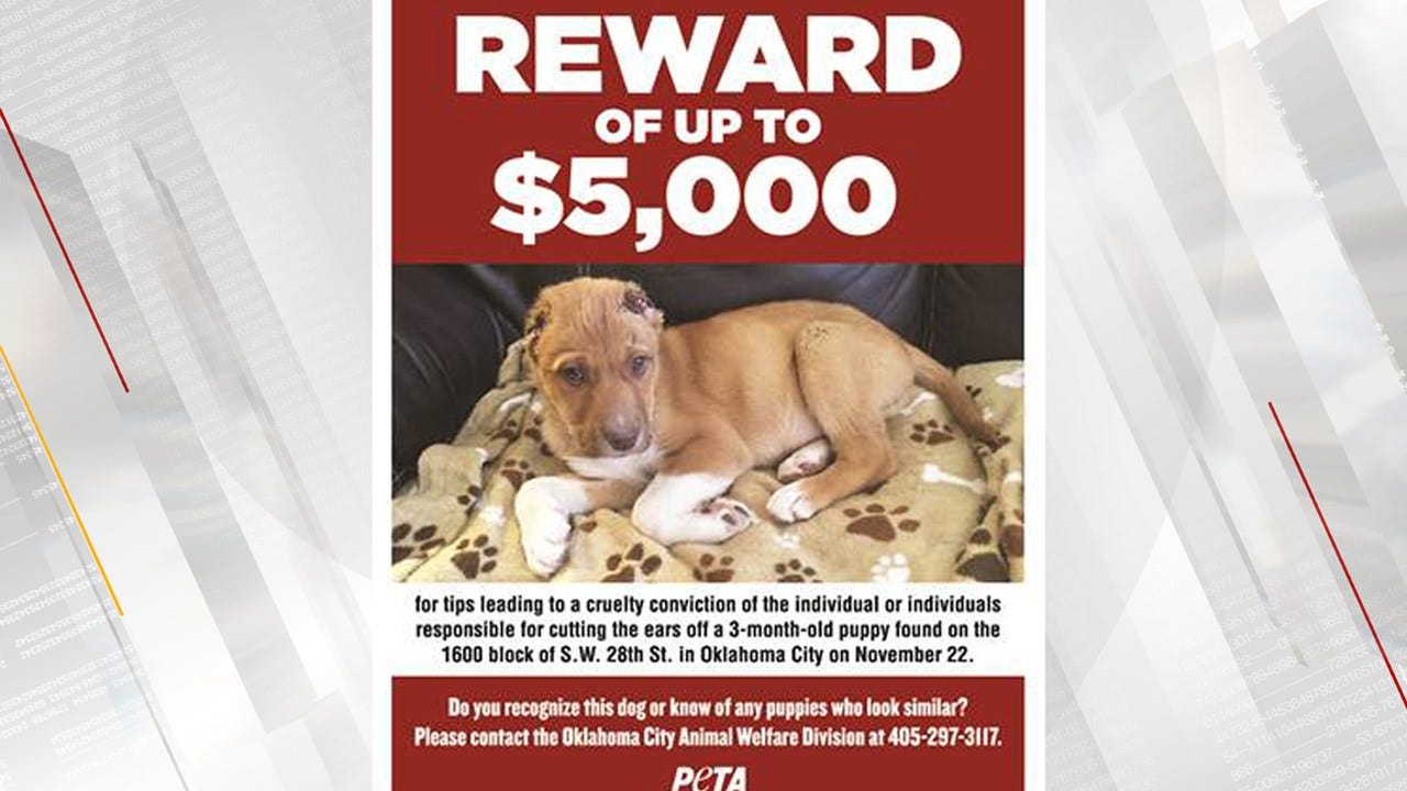 $5,000 Reward Offered To Help Locate Suspect(s) Responsible For Mutilating Puppy