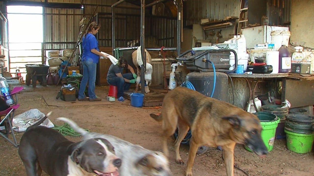 Jones Horse Rescue Sees Repeat Case