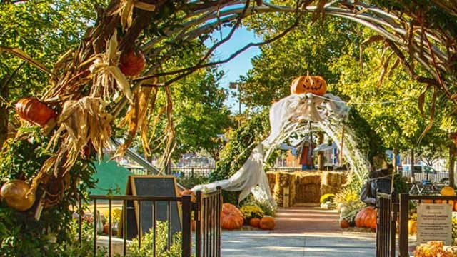 Pumpkinville, Pumpkin Patches Across The State Kick Off Fall In OK