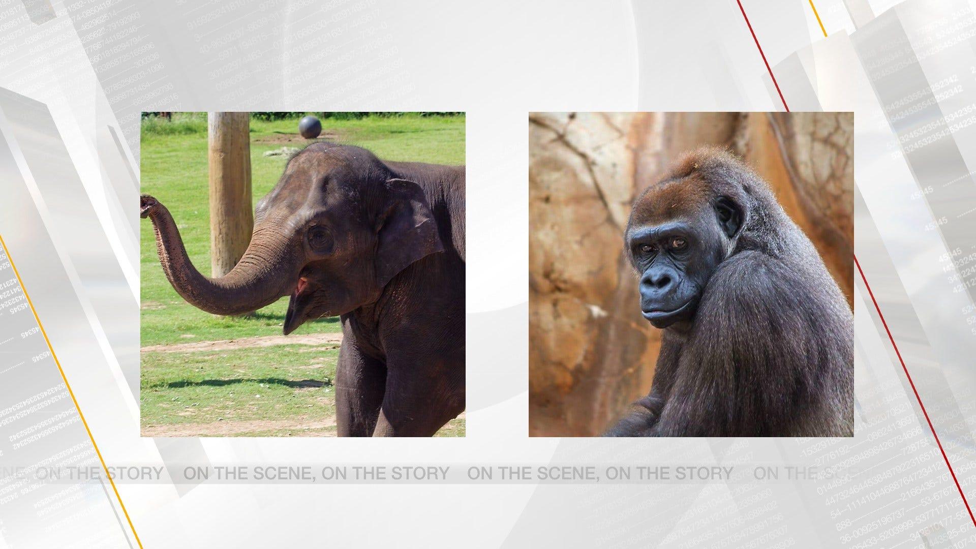 OKC Zoo Announces Pregnancies Of Two Animals