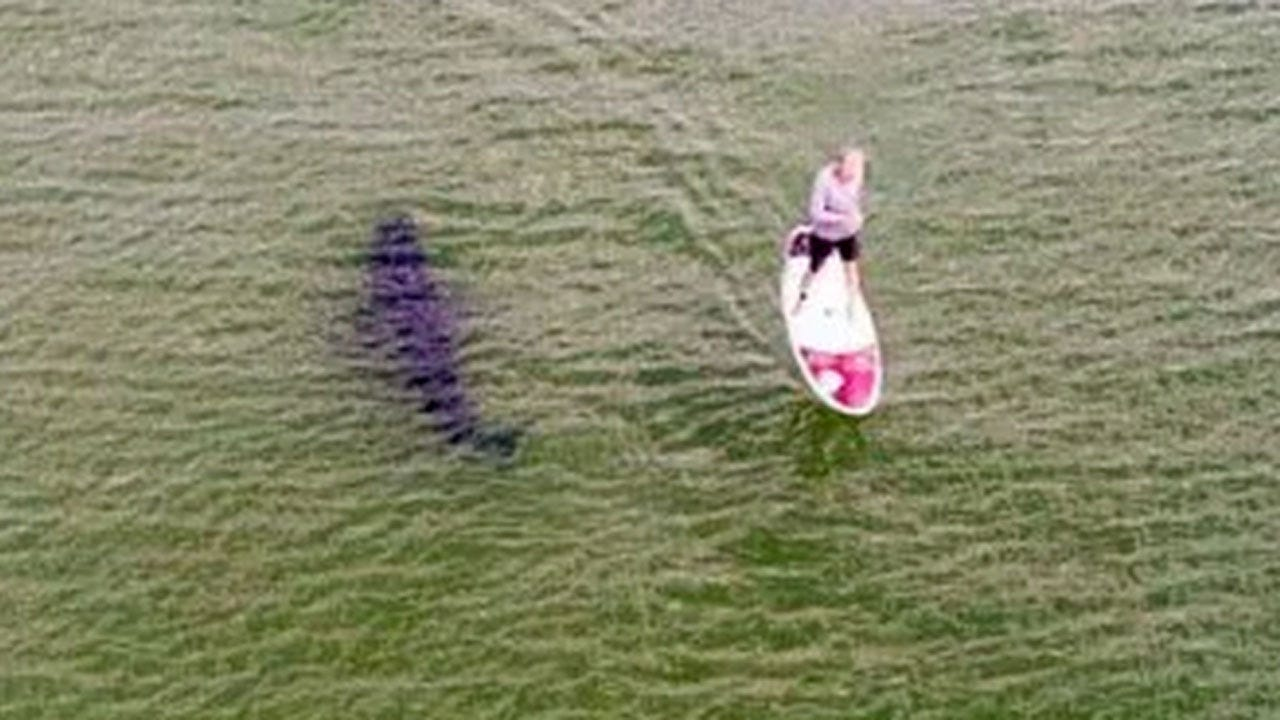 Photo Captures Great White Shark Lurking Next To Oblivious Paddleboarder