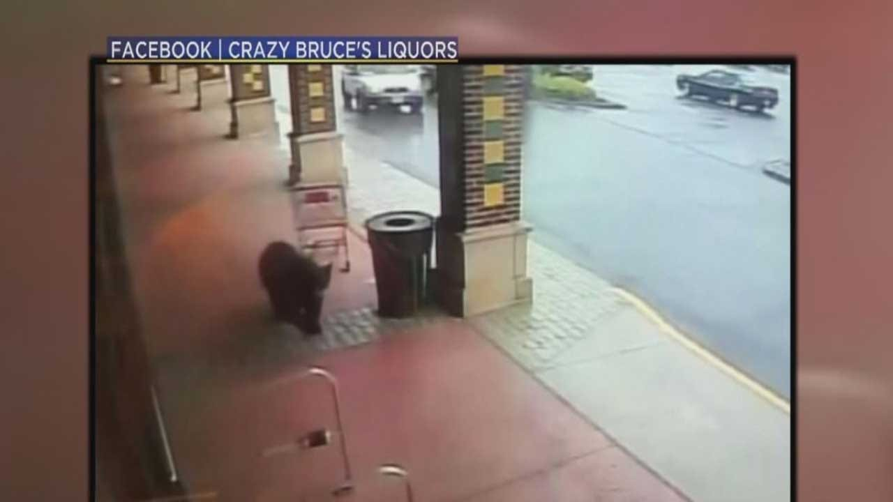 Bear Makes An Unlikely Stop In A Liquor Store