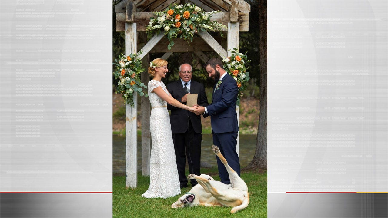Dog Photobombs Owners' Wedding Photo, Goes Viral