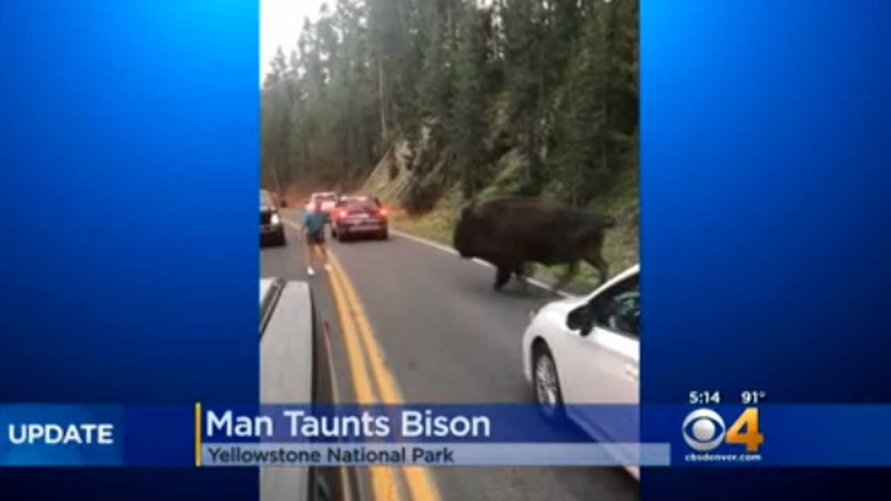 Video Captures Man Taunting Bison At Yellowstone National Park