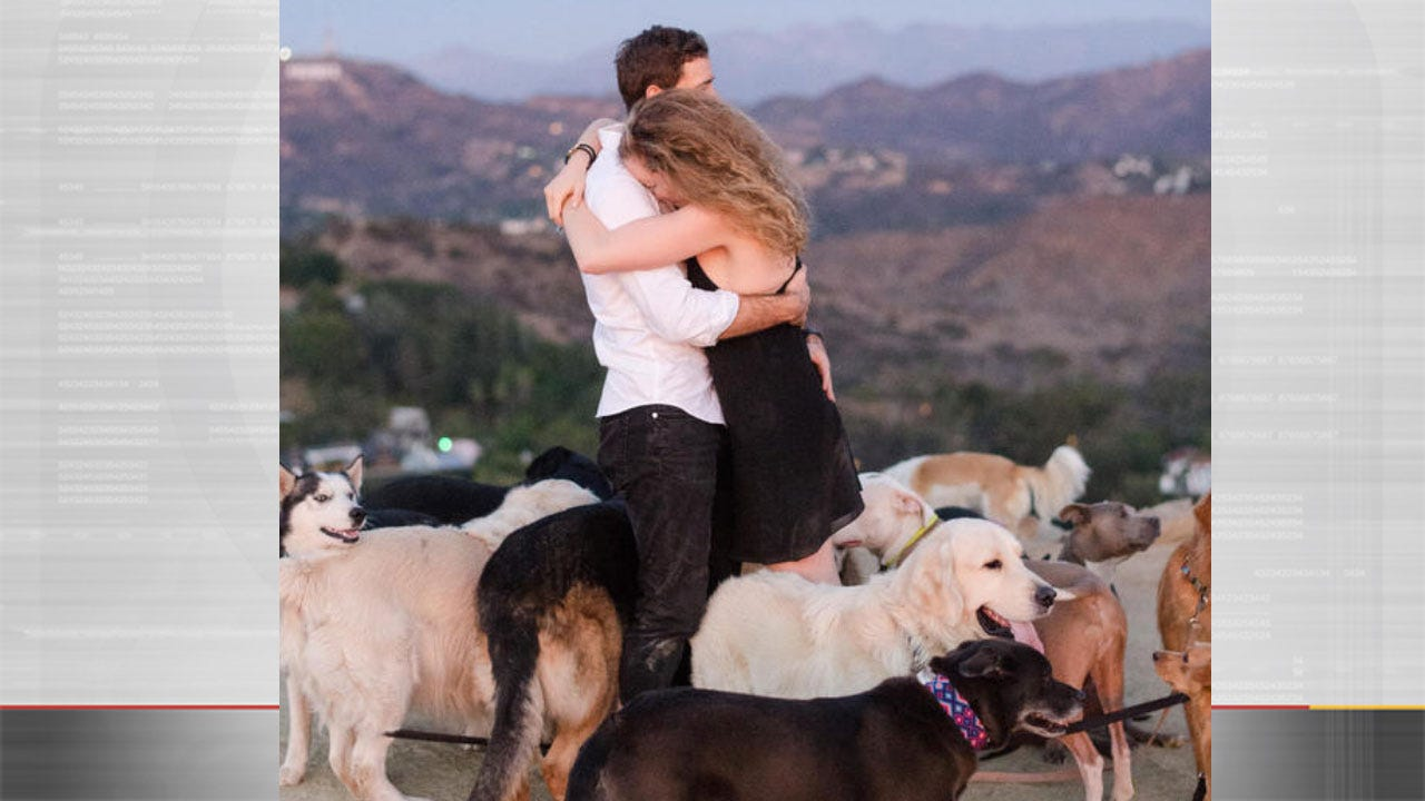 Man Proposed To His Girlfriend, With 16 Dogs In Tow