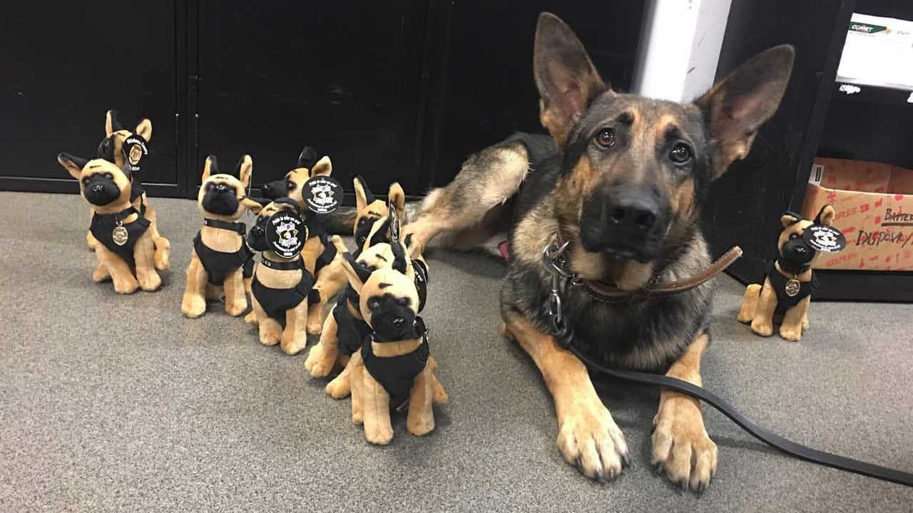 OCSO K-9 Han To Receive Protective Vest