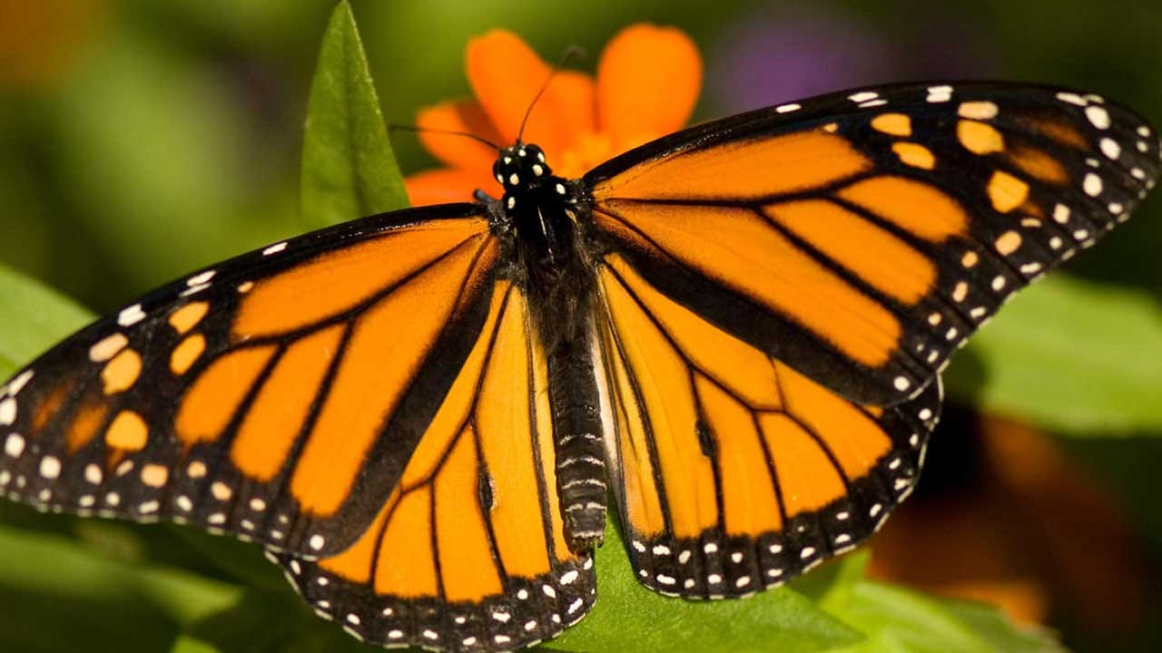Butterfly Sanctuary Expected To Be Plowed Over For Trump's Border Wall