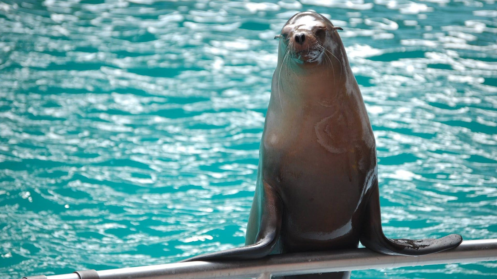 Zoo Offering Free Sea Lion Presentations This Weekend