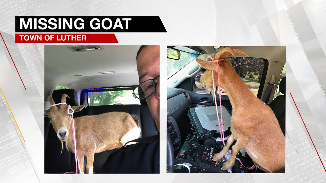 Luther Police Search For Owner Of Lost Goat