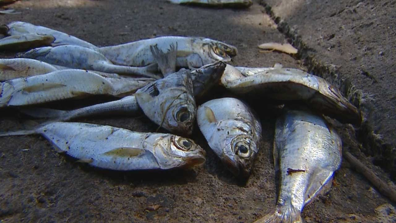 DEQ: Cause Unclear For Fish Kill At Lake Hefner