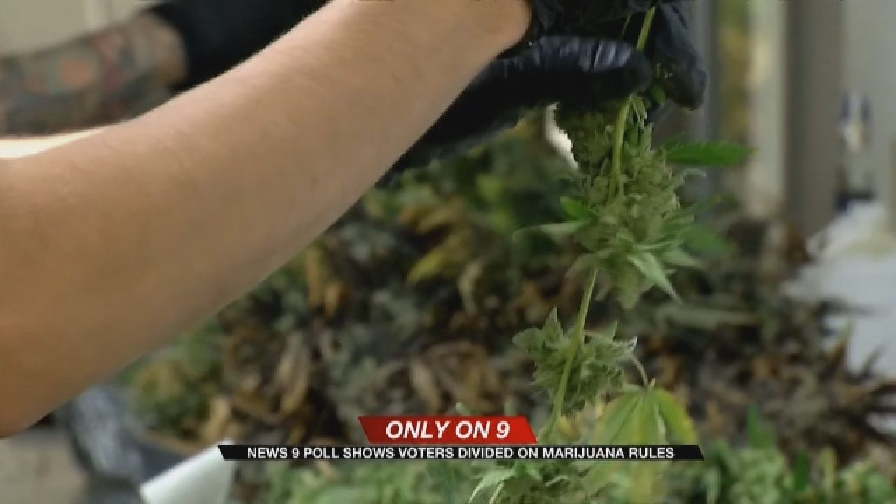 News 9 Poll Shows Voters Divided On Medical Marijuana Rules