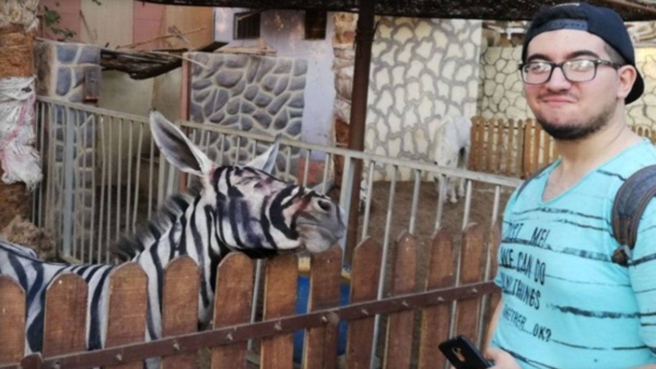 Egyptian Zoo Accused Of Painting Donkeys To Look Like Zebras