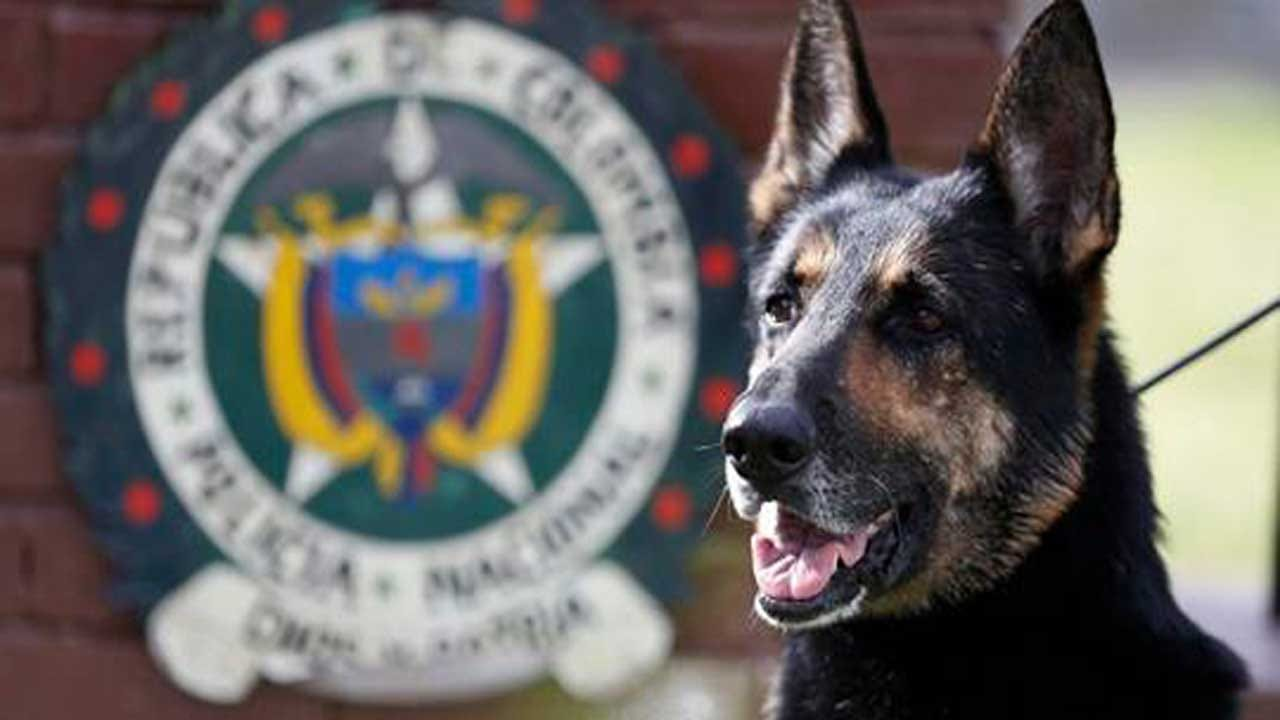 Colombian Drug Cartel Put A $70K Bounty On This Dog