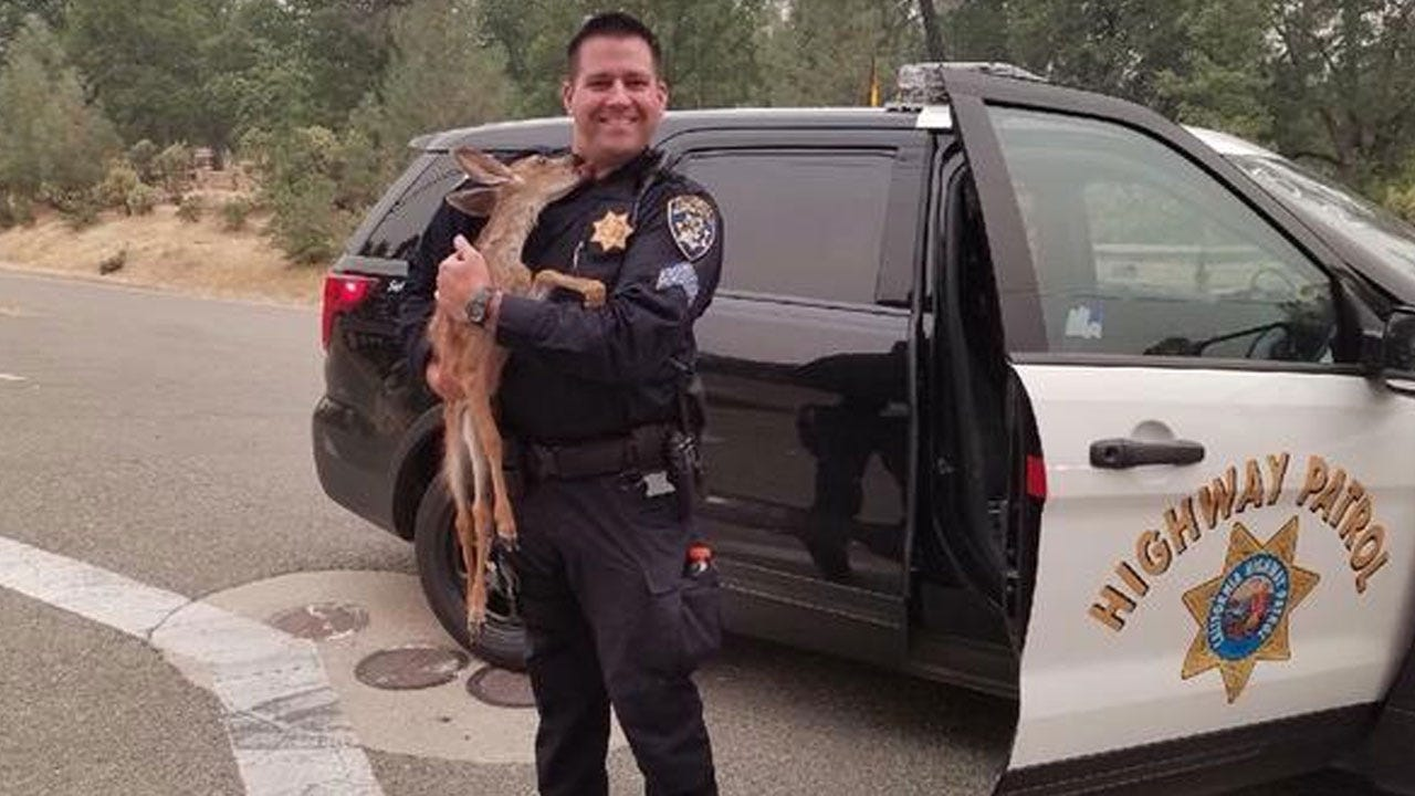 Fawn Gives Cop A Kiss After California Wildfire Rescue