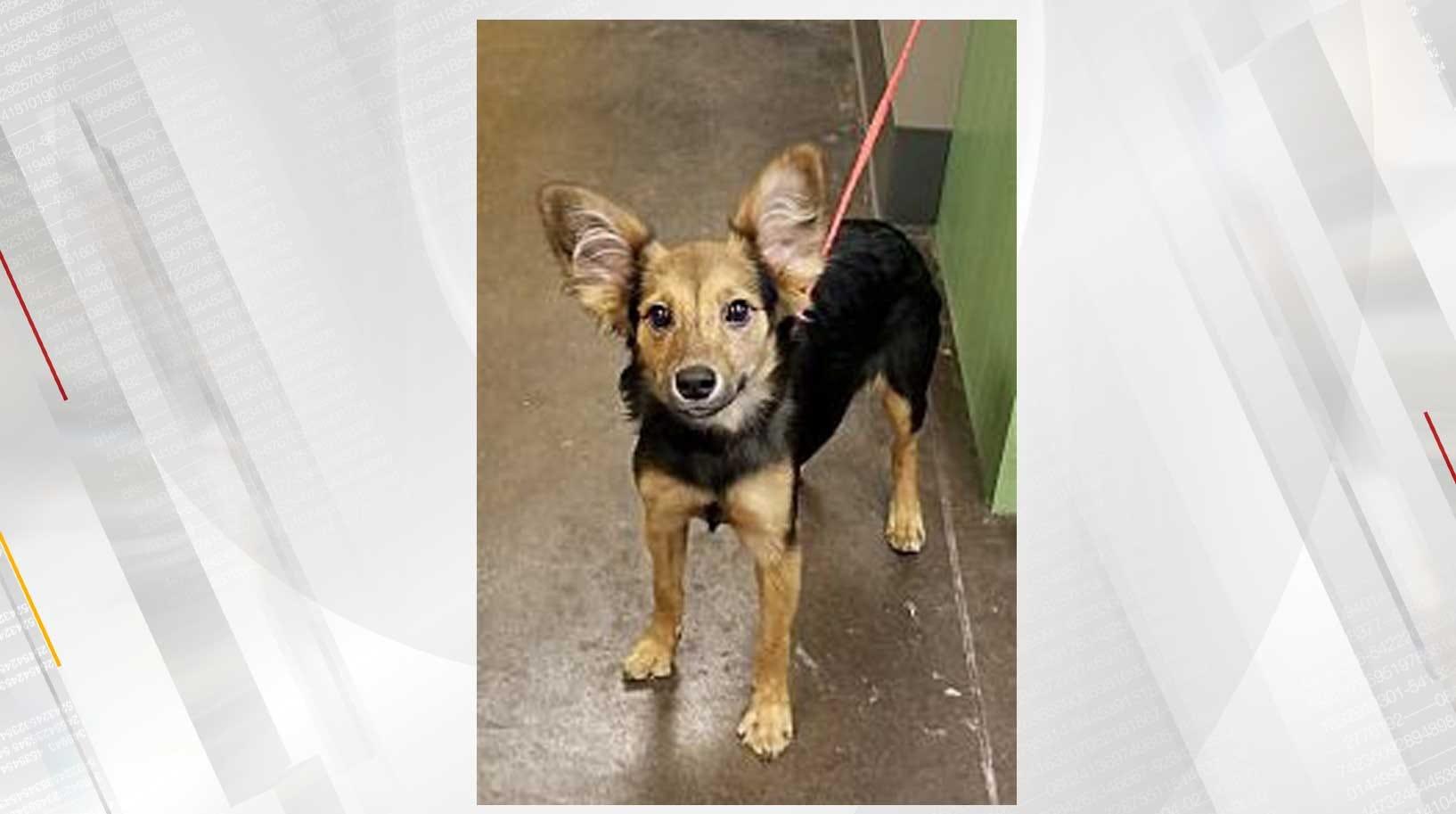 Norman Animal Welfare Holds 2-Week Long Adoption Event