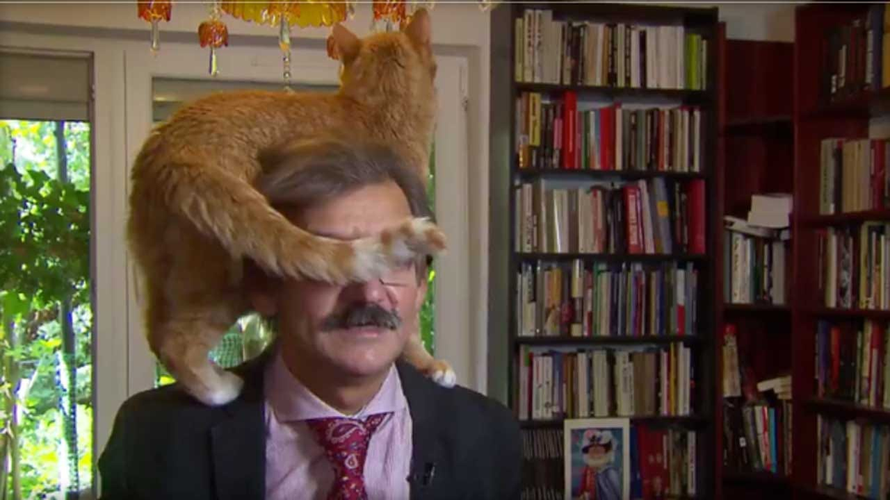 TV Commentator's Cat Climbs Onto His Head During Interview