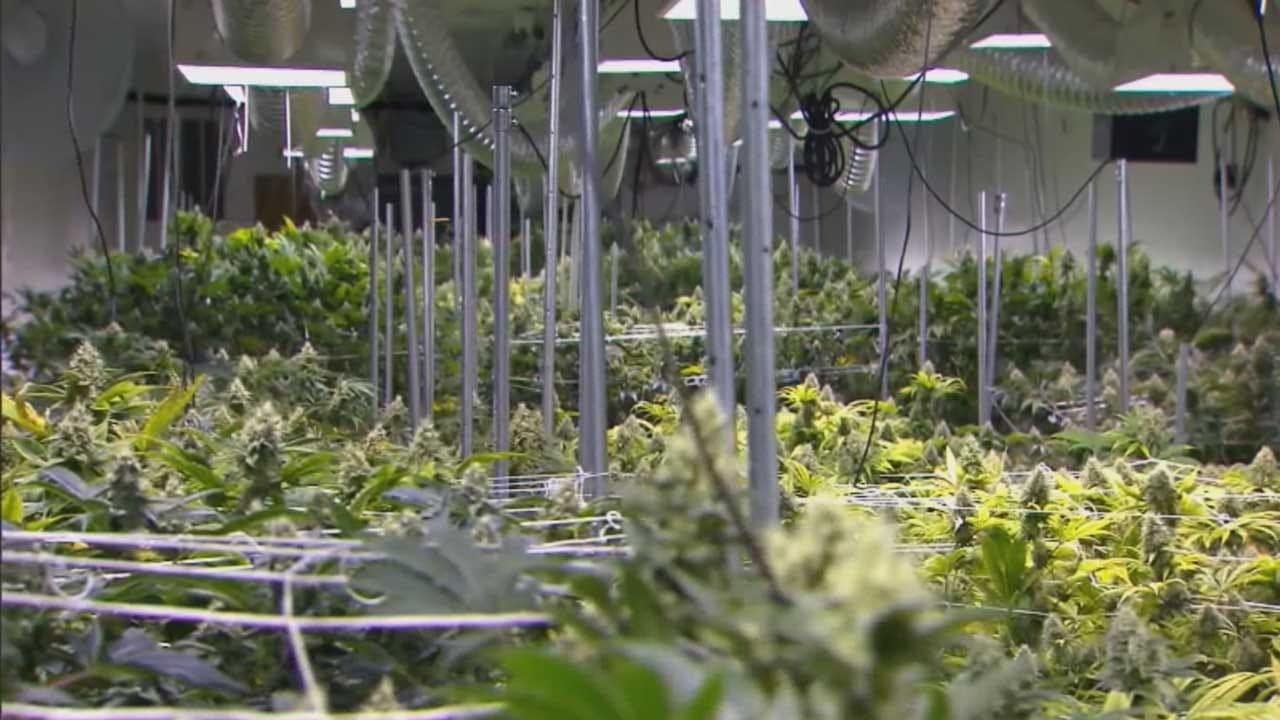 Trade Group Representing Medical Marijuana Calls For Special Session
