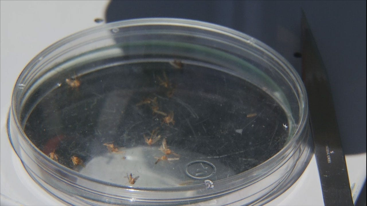 Human Case Of West Nile Virus Confirmed In Oklahoma County
