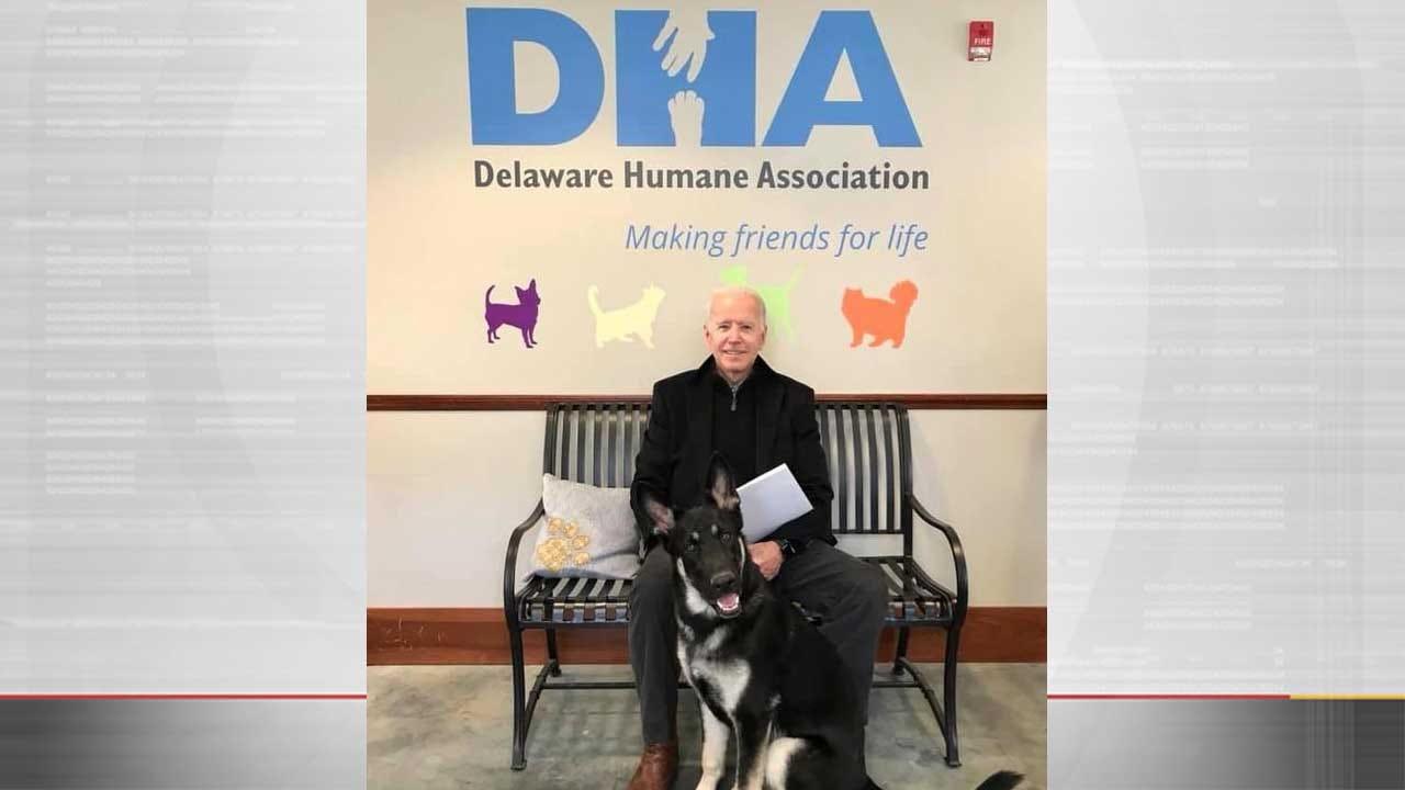 Former Vice President Joe Biden Adopts Rescue Dog Named Major