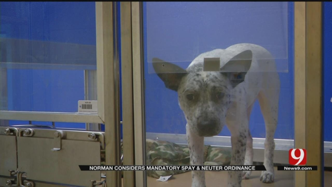 Norman Considering Mandatory Spay-Neuter Ordinance