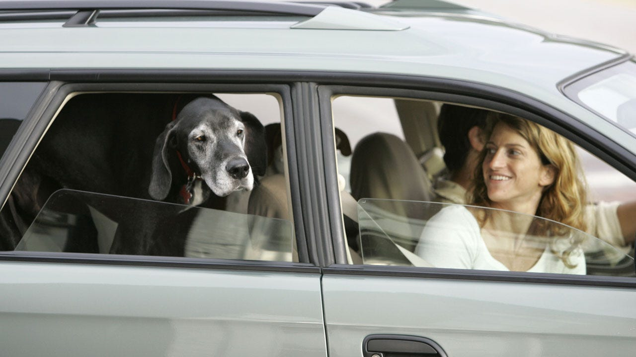 Ohio Drivers Holding A Pet Will Be Cited Under New Distracted Driving Law