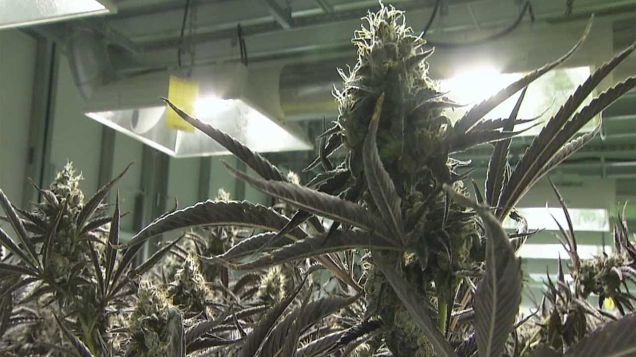 State Lawmakers Agree On First Round Of Medical Marijuana Regulations
