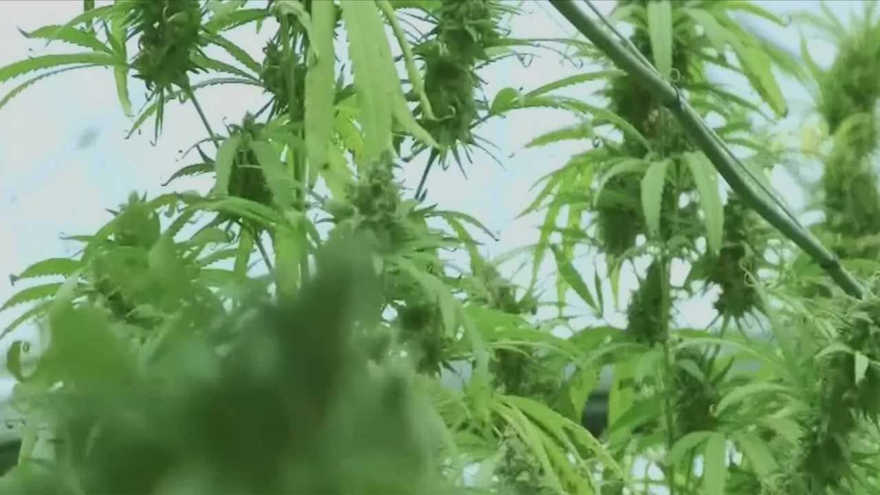 Medical Marijuana Bank To Open In OKC