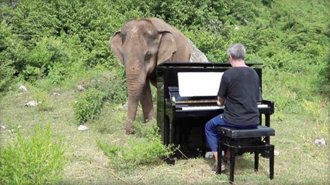 Man Plays Piano To Soothe Ailing, Blind Elephants At Sanctuary In Thailand