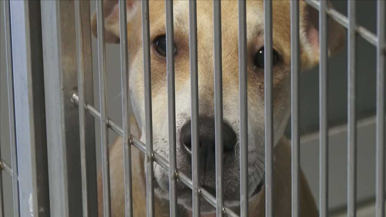 Local Organizations Team Up To Help Pets Affected By Domestic Violence