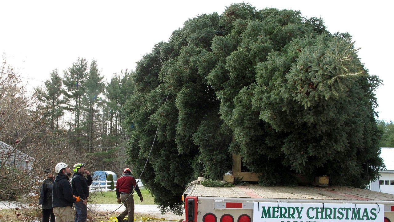 Amazon's Holiday Plans: Shipping Fresh 7-Foot Christmas Trees