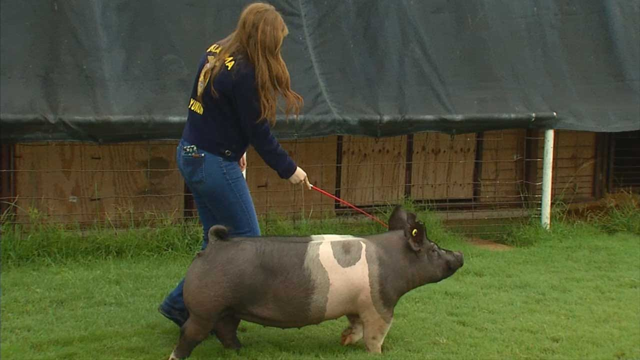 Oklahoma FFA Students Donate Swine To Food For Kids Program