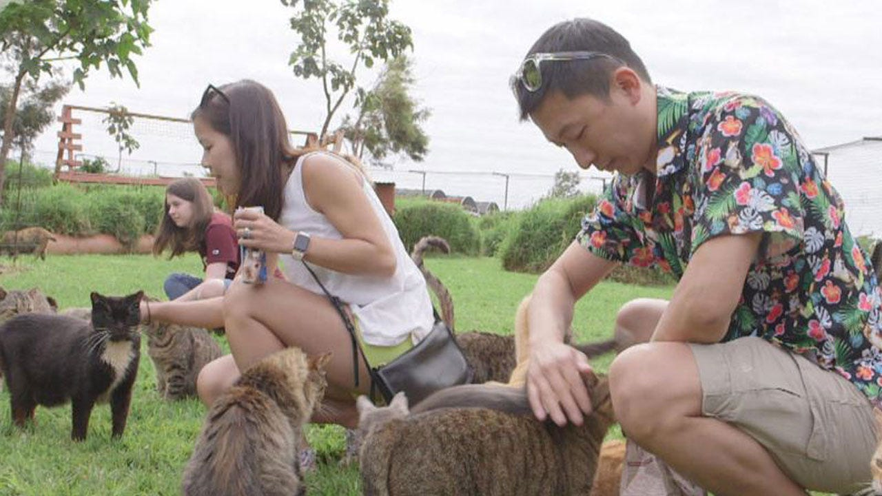 Purr-adise: Hawaii's Cat Sanctuary Welcomes Visitors Worldwide