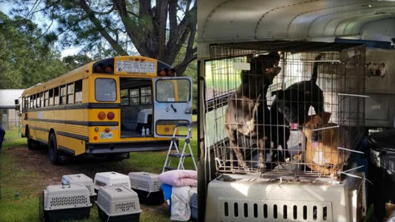 Pet Lover Helps Dozens Of Cats, Dogs Escape Hurricane Florence On School Bus