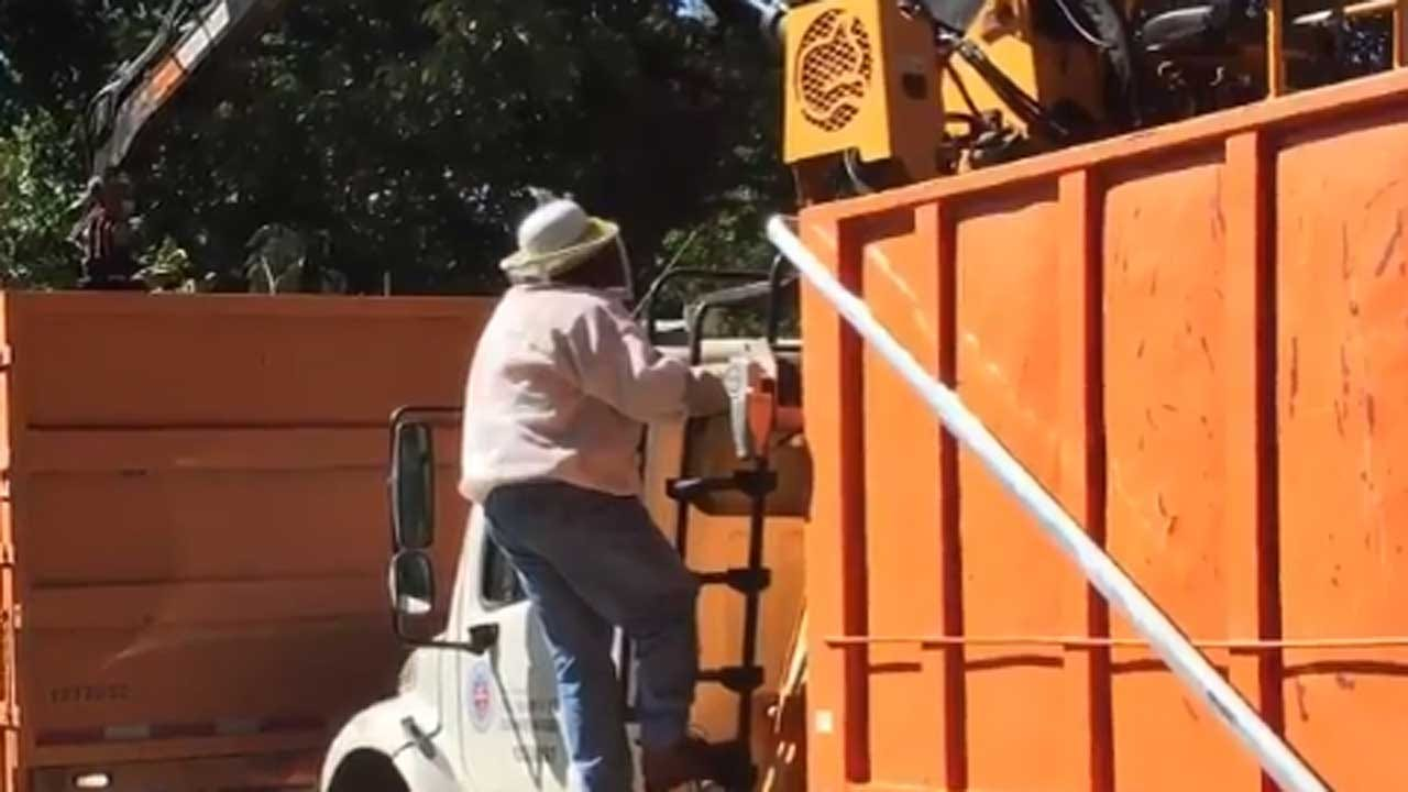 2 OKC Employees Attacked By Bees
