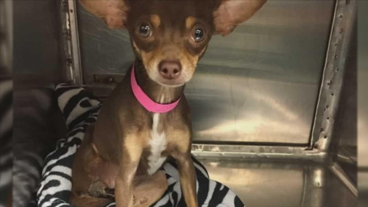 Rescue Dog With Exposed Bone Undergoes Surgery
