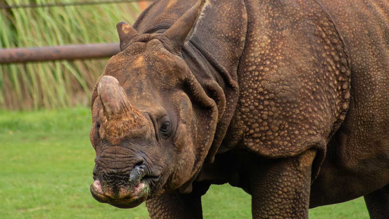OKC Zoo Saddened By The Death Of Male Rhino Chandra