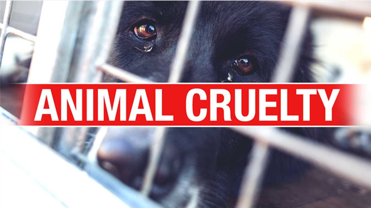 House Passes Bill That Would Make Animal Cruelty A Federal Felony
