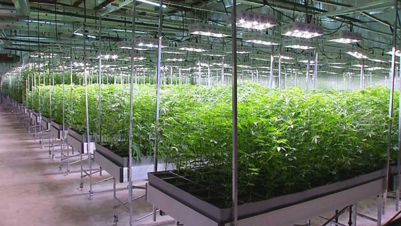 Medical Marijuana Grow Operations In Vacant Buildings A Concern For Del City Officials