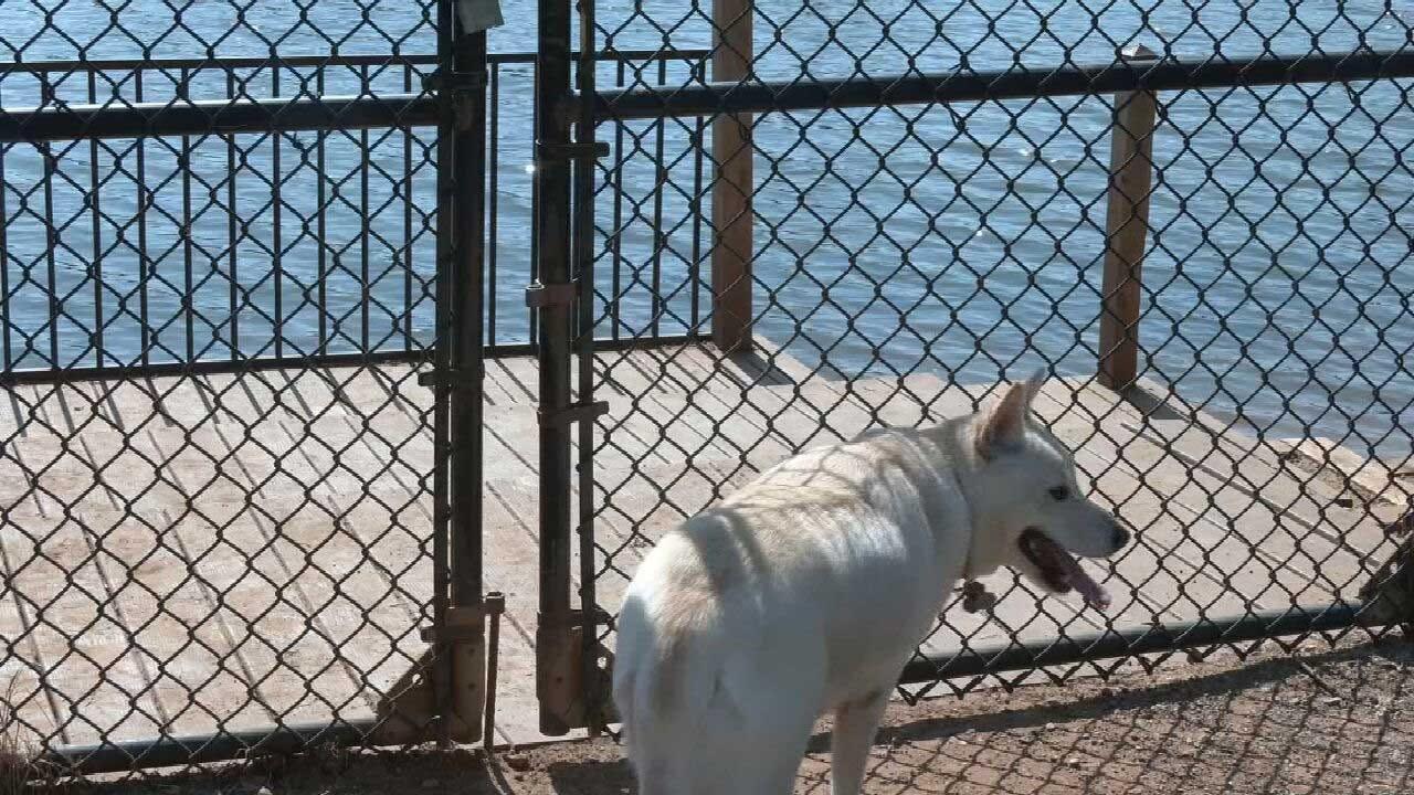 Oklahoma Cities Testing For Dog-Killing Blue-Green Algae At Ponds, Lakes