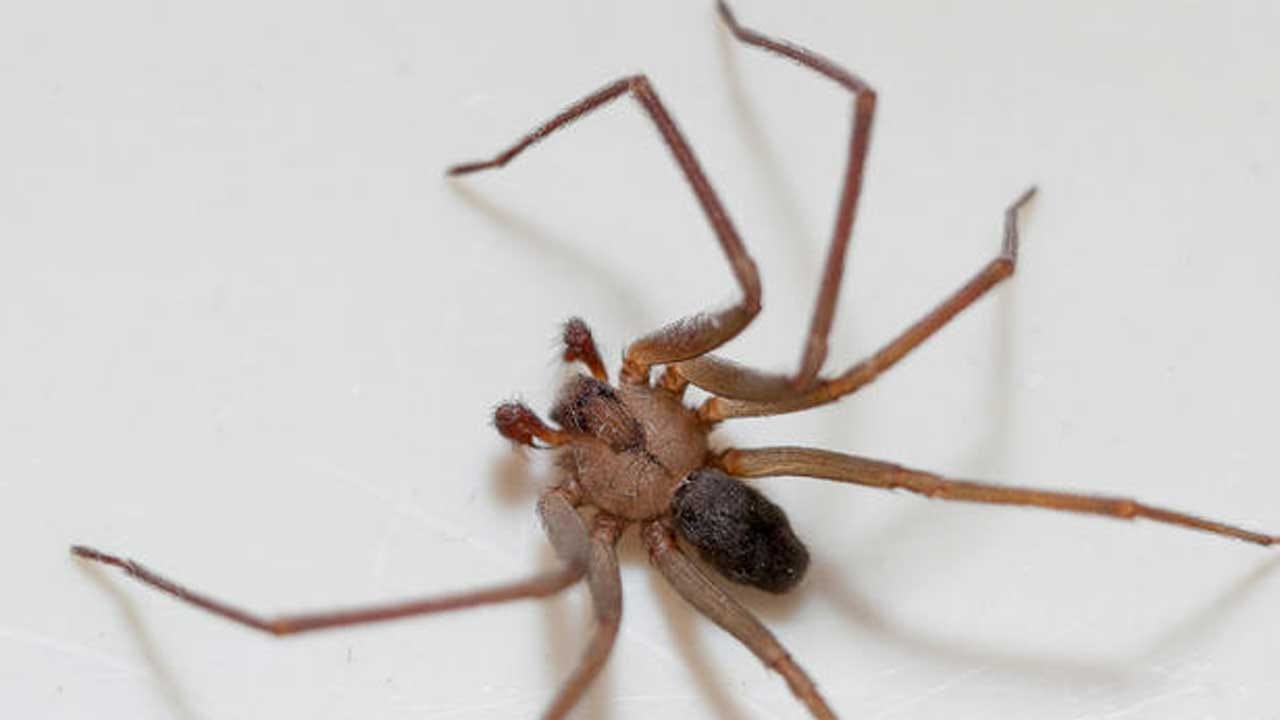 This Woman Thought She Had Water In Her Ear. Doctors Pulled Out A Spider.