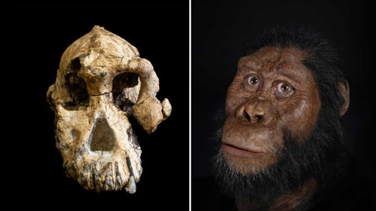 Ancient Fossil Reveals Face Of Early Human Ancestor